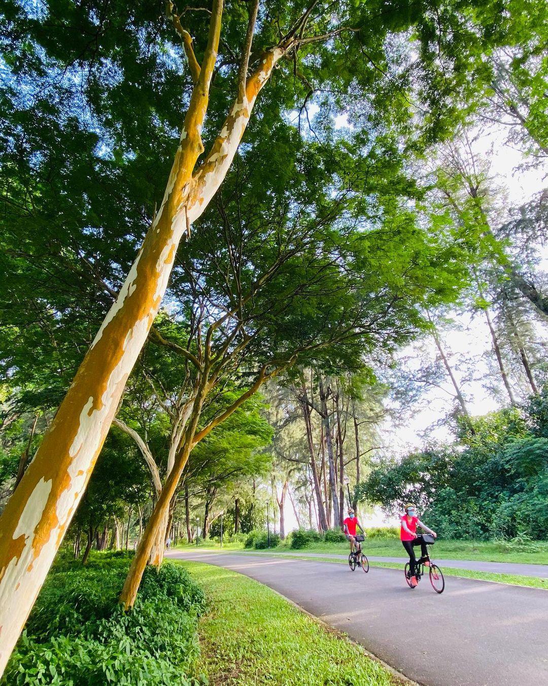 Cycling changi PCN