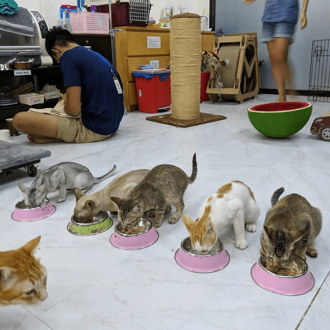 Kitten Sanctuary - Feeding The Cats