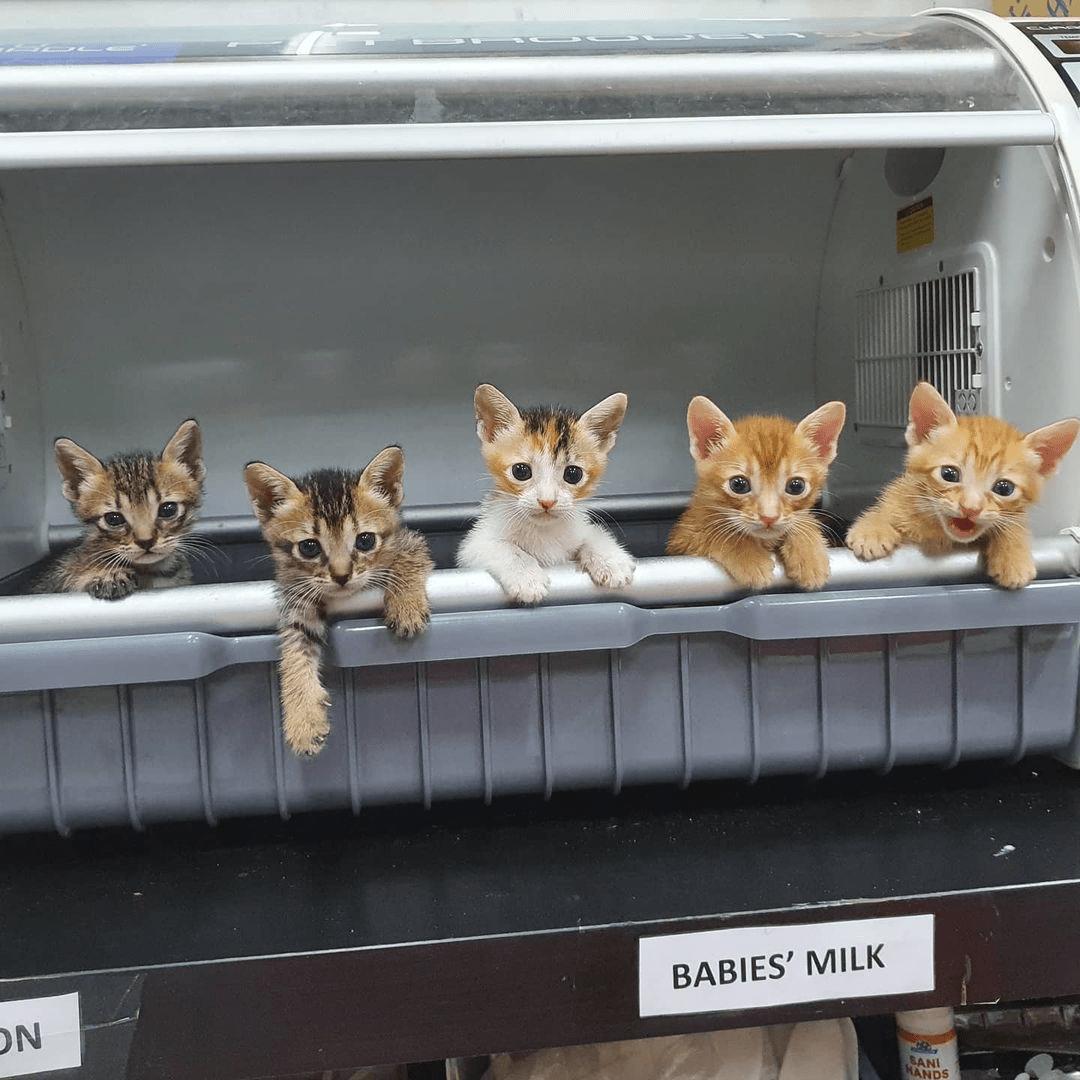 Kitten Sanctuary - Kittens