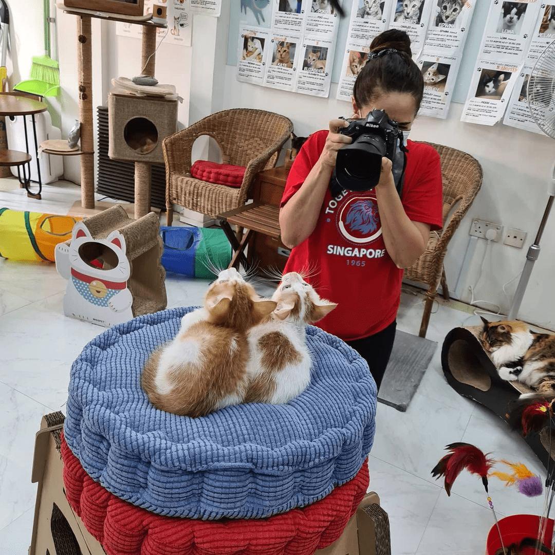 Kitten Sanctuary - Volunteer Opportunities