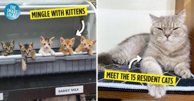 Kitten Sanctuary Singapore