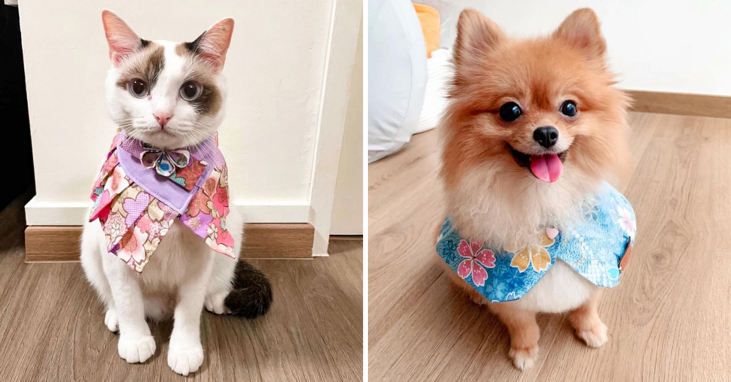 Pet accessories Singapore - Fur and Bloom
