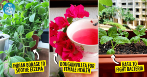 Plants With Benefits in Singapore