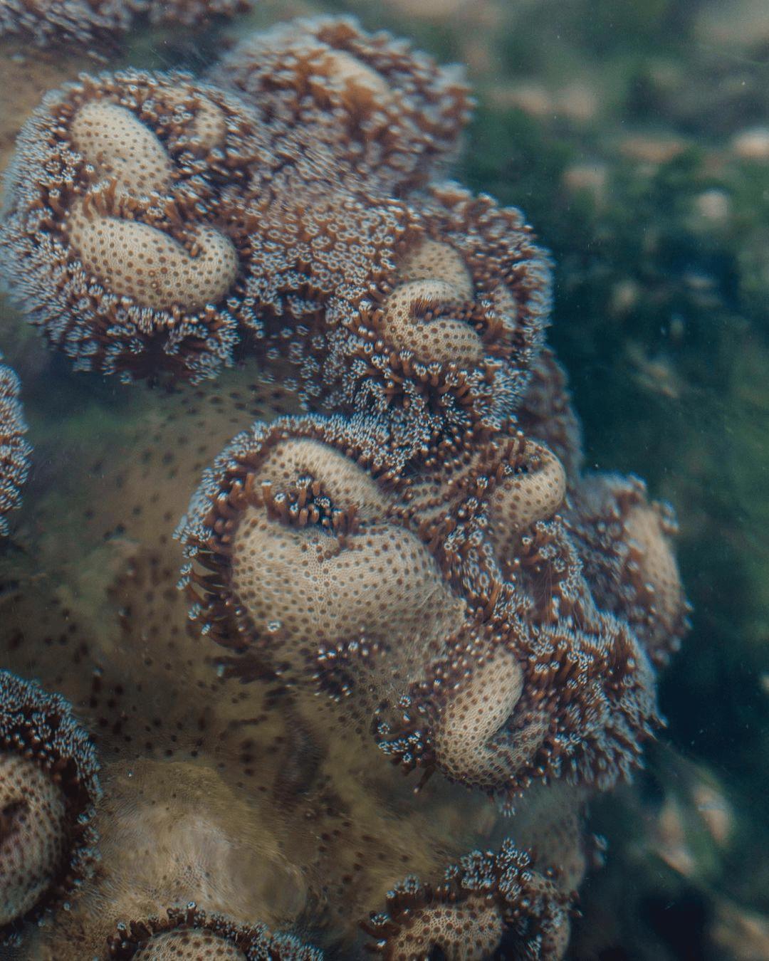 Tanjong Rimau Beach - Marine Life