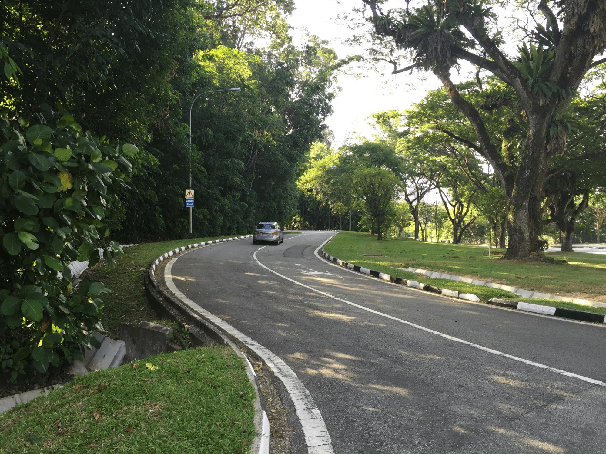 devils bend road - curved road