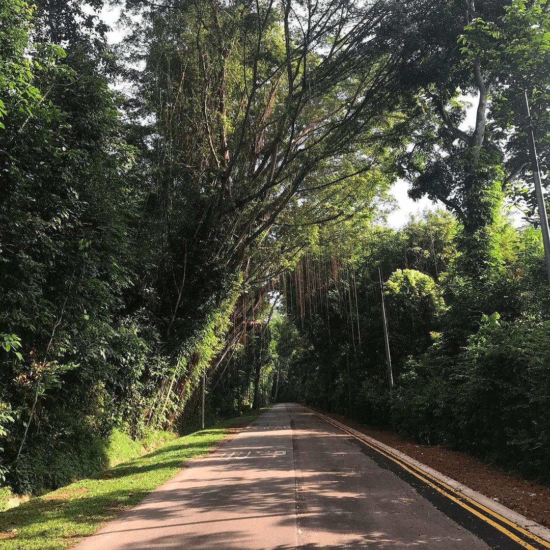 devils bend road- road