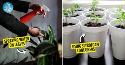 Gardening Mistakes Singapore