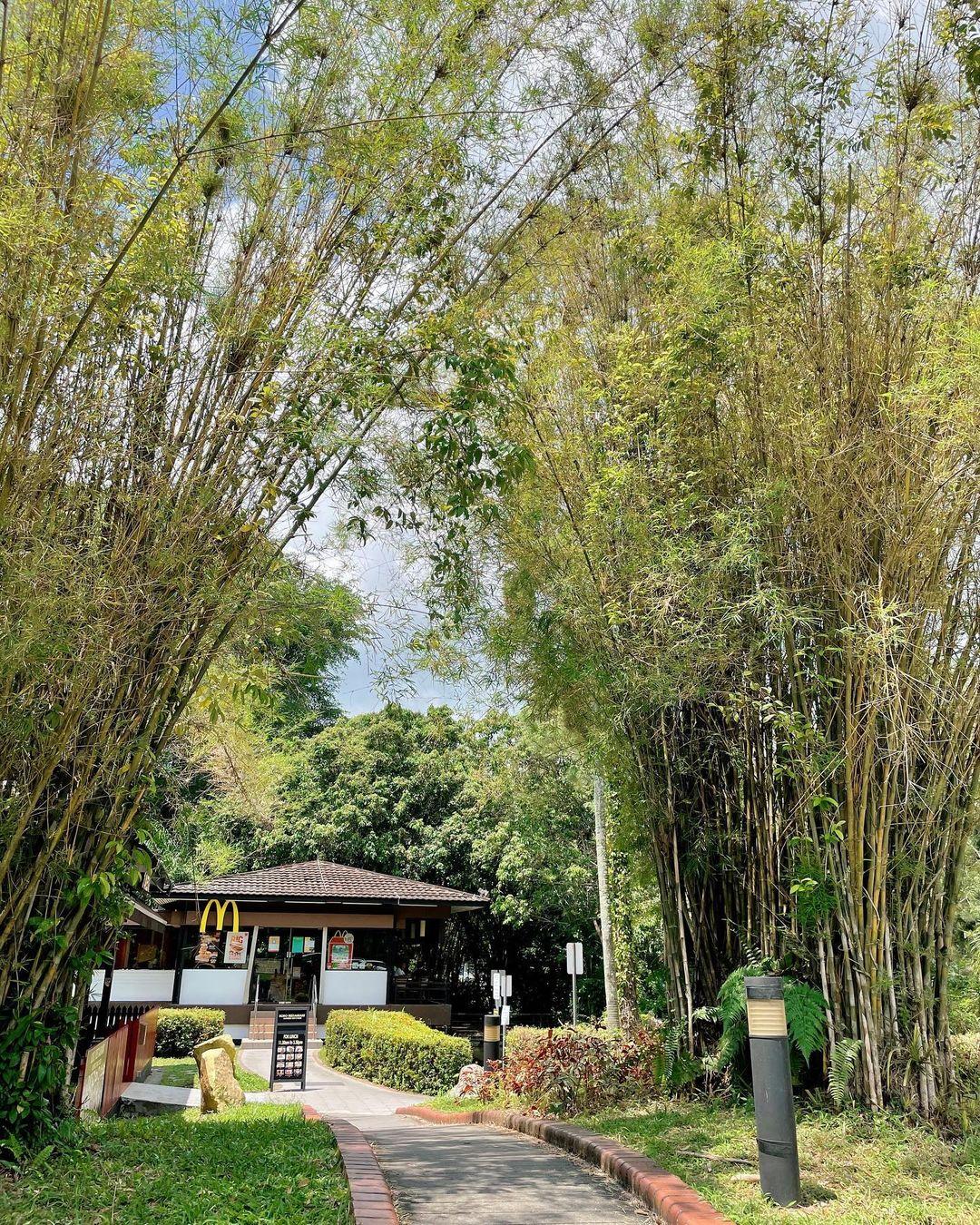 Queensway McDonald's - bamboo grass
