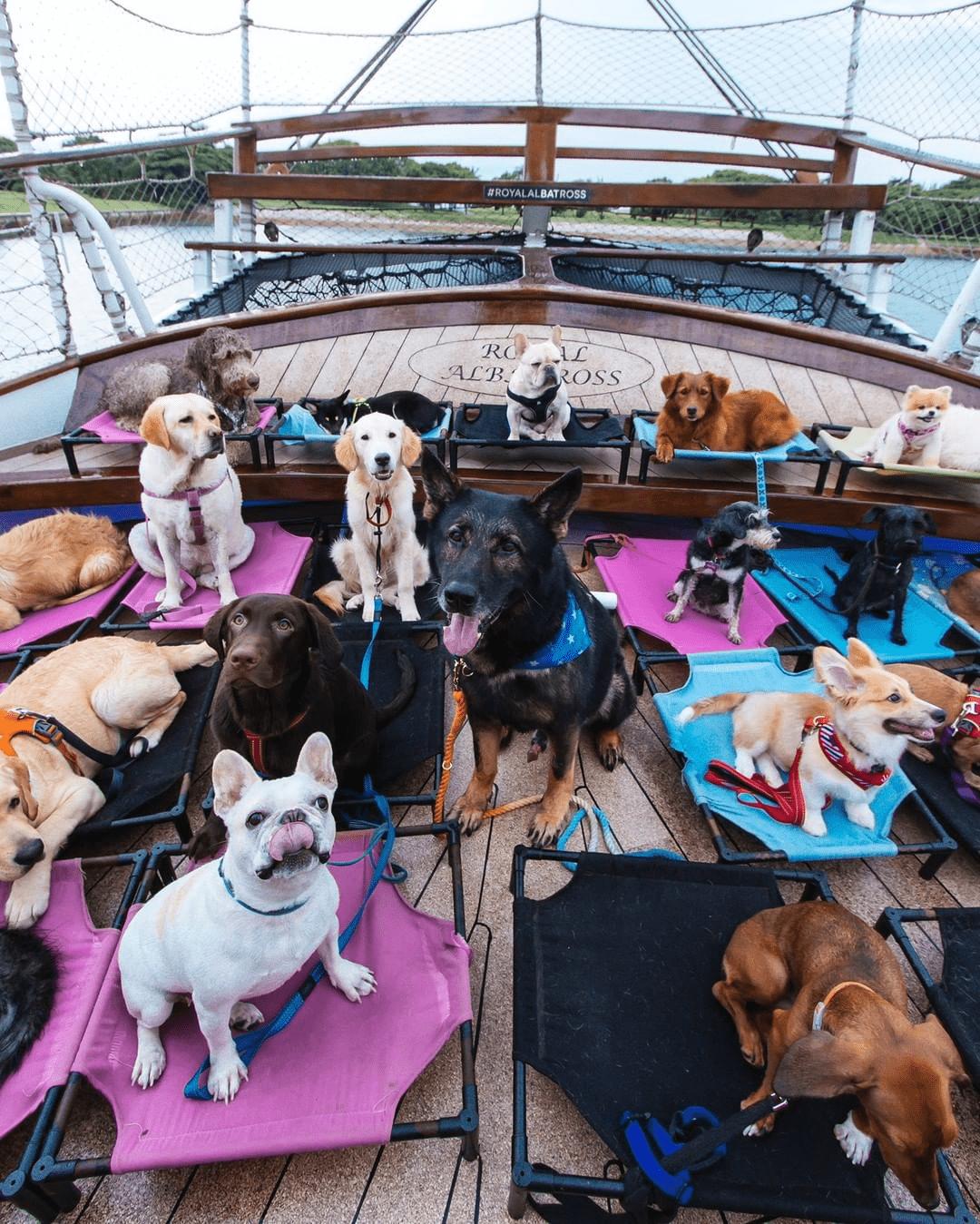 Sentosa SRV - Dog Cruise