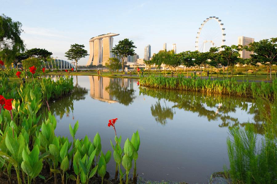 Bay East Garden - Pond