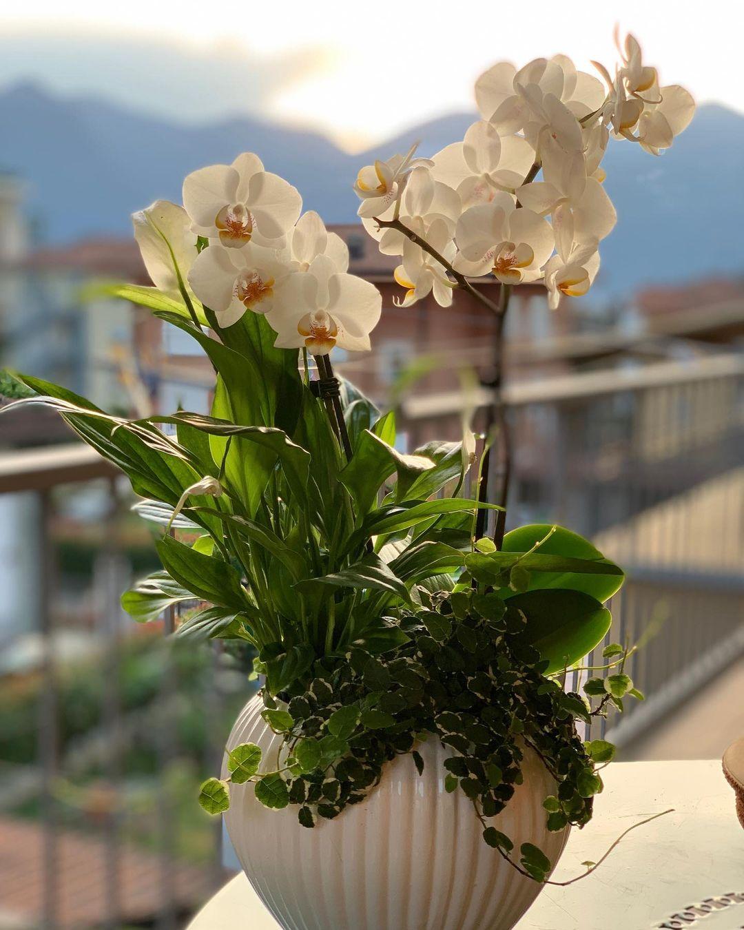 orchids indoor flowering plants