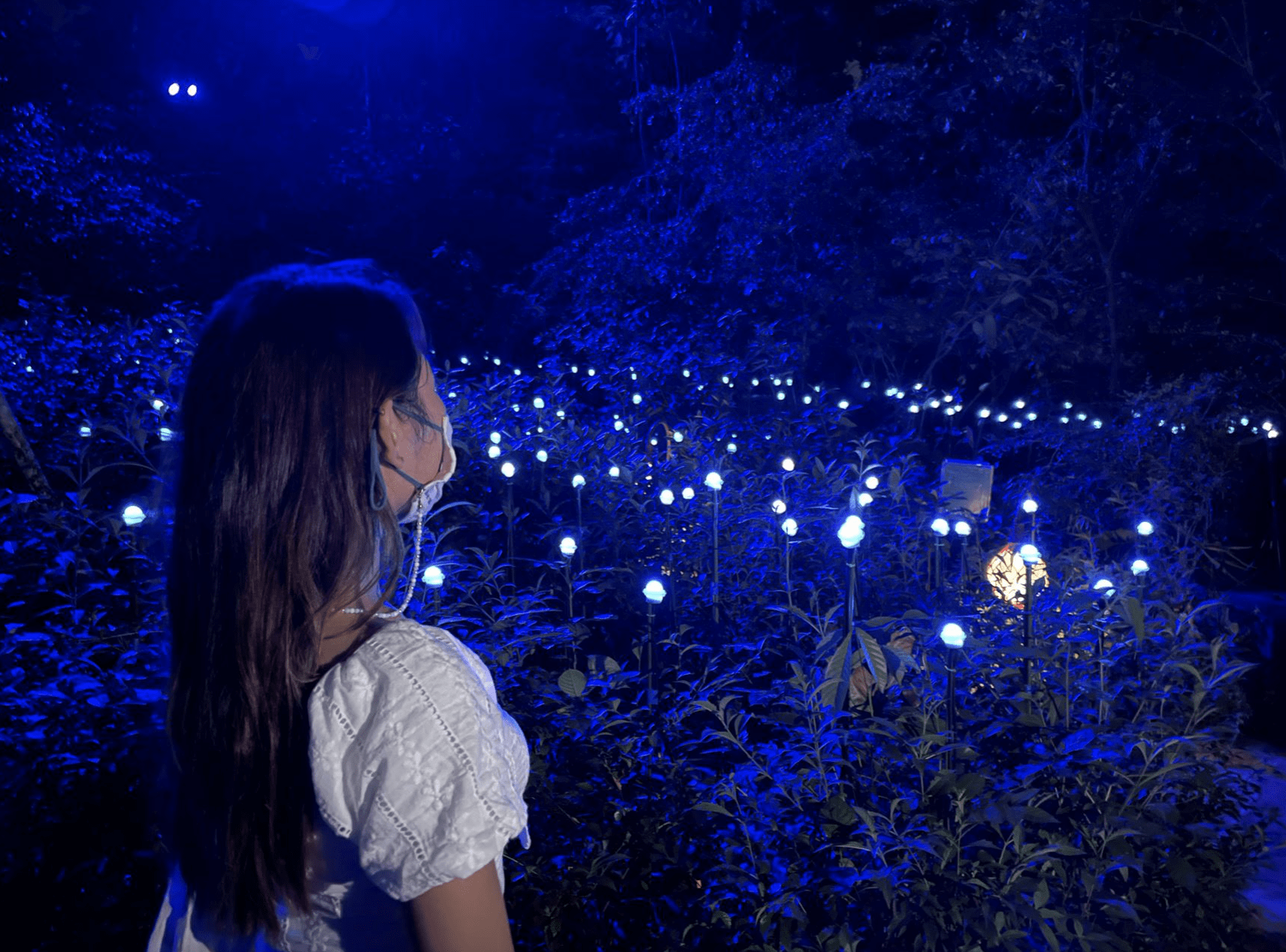 new things to do in july 2021 - Rainforest Lumina