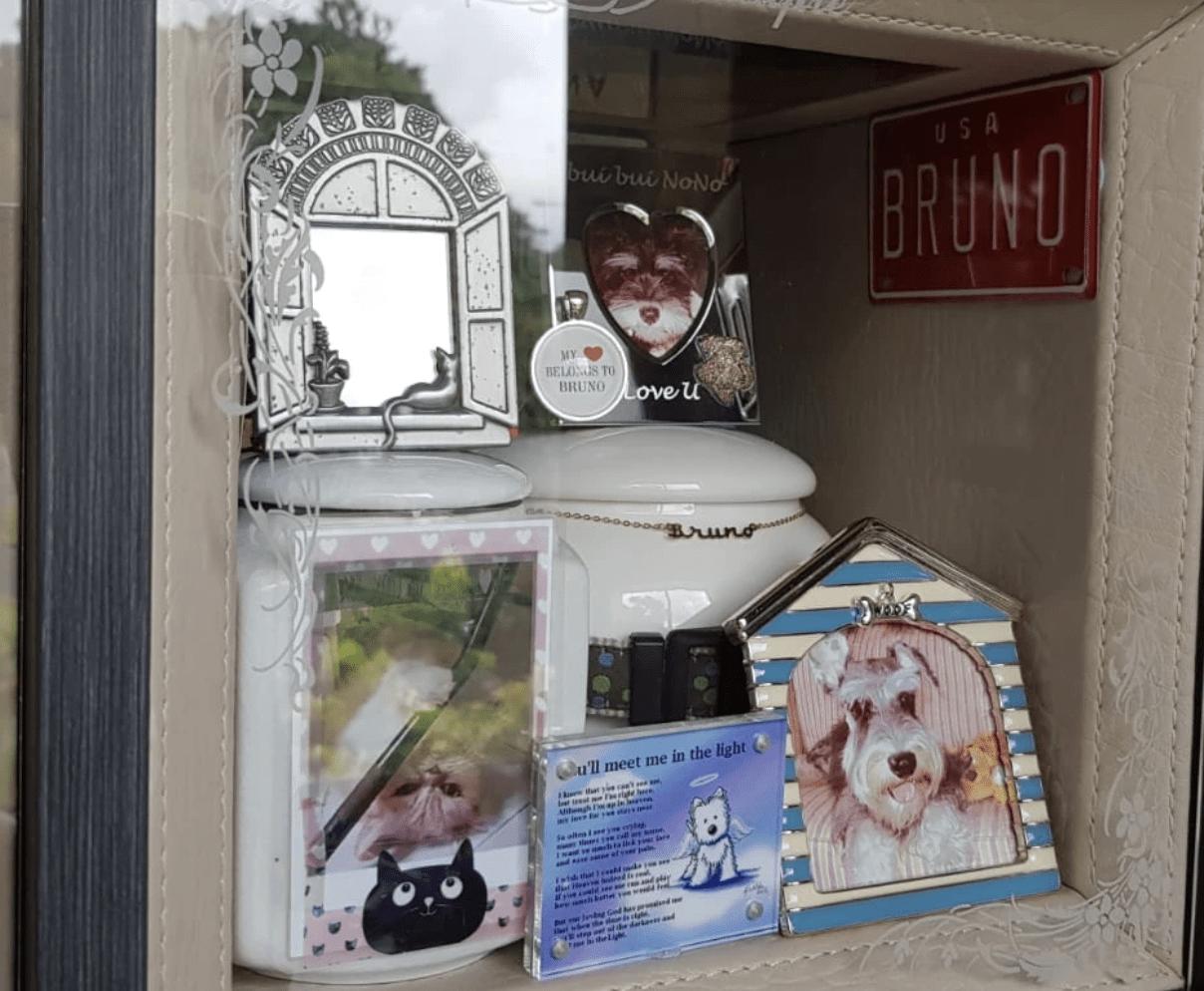 Mandai Pets Sanctuary