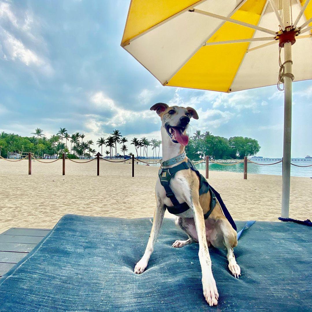 pet friendly beach clubs