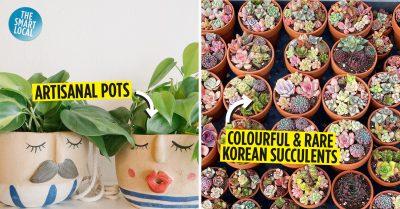 boutique plant shops