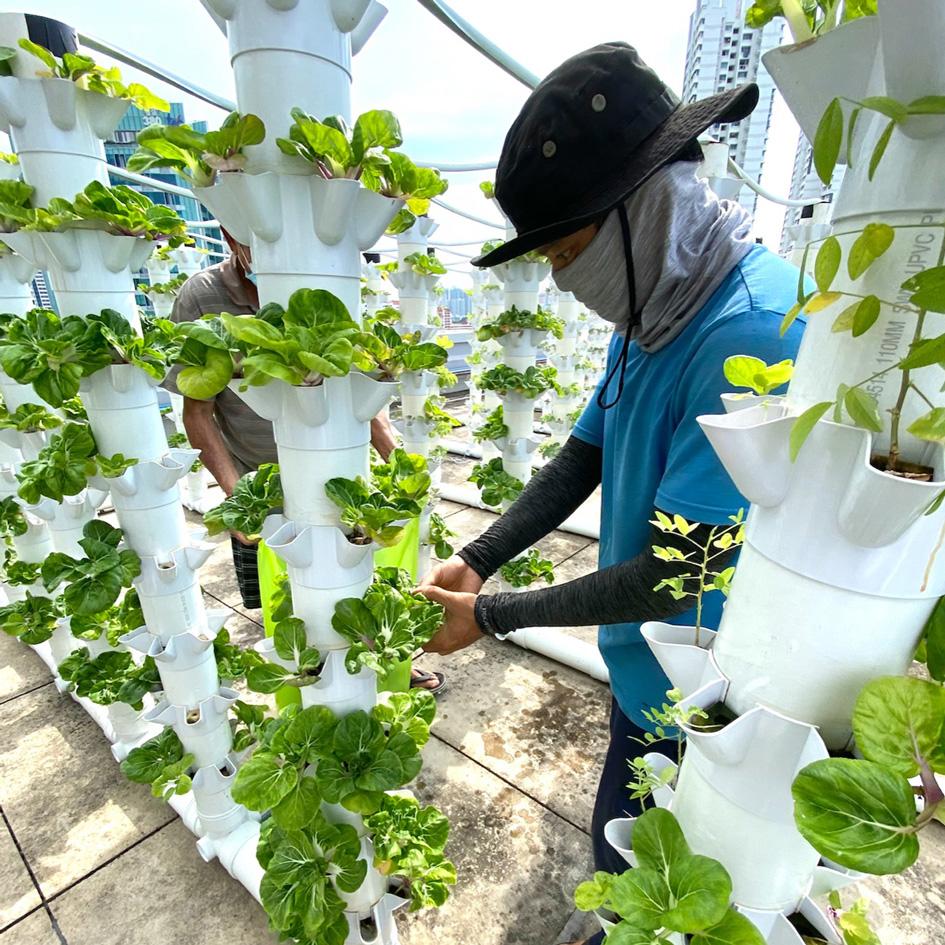 frux earth urban farming