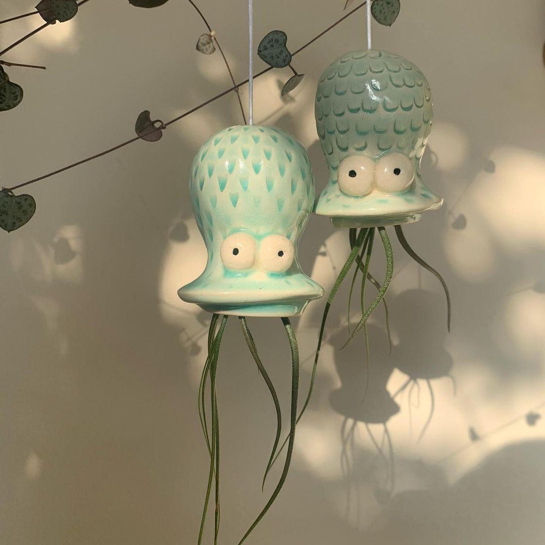 Tillandsia bulbosa hanging air plant