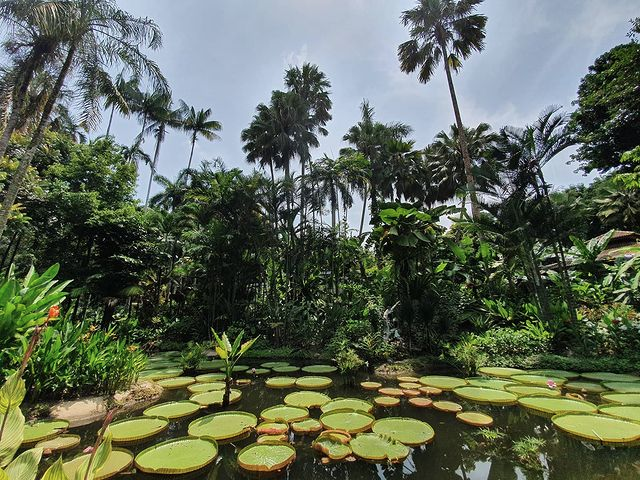 Ginger Gardens