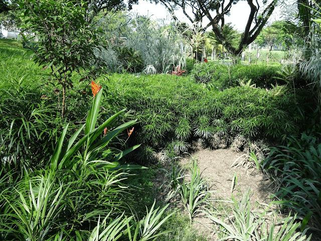 Lower Seletar Reservoir - rain garden