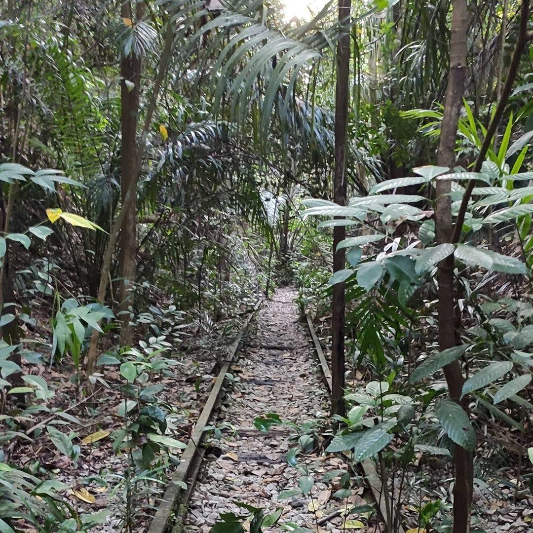 Maju Forest jurong railway line tracks