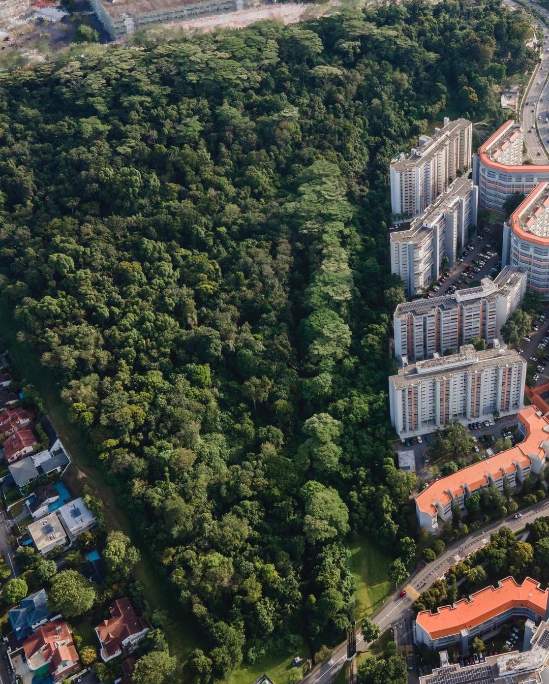 Maju Forest covers 24 hectares, or about 33 soccer fields