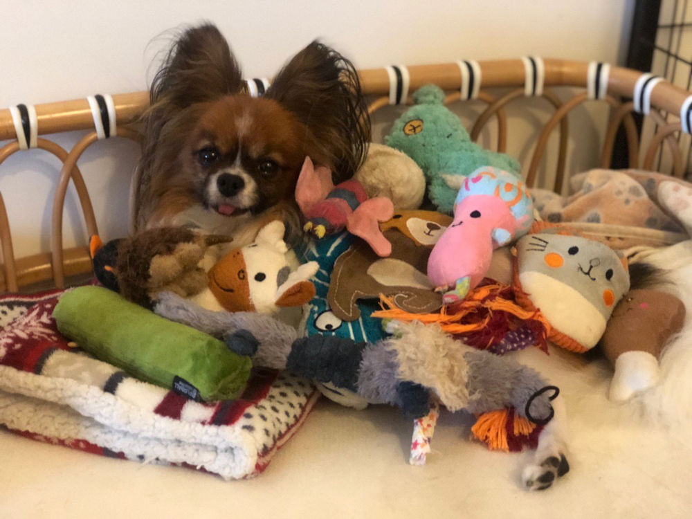 Dog covered in plushies