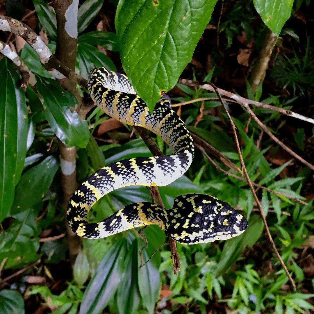snake wildlife