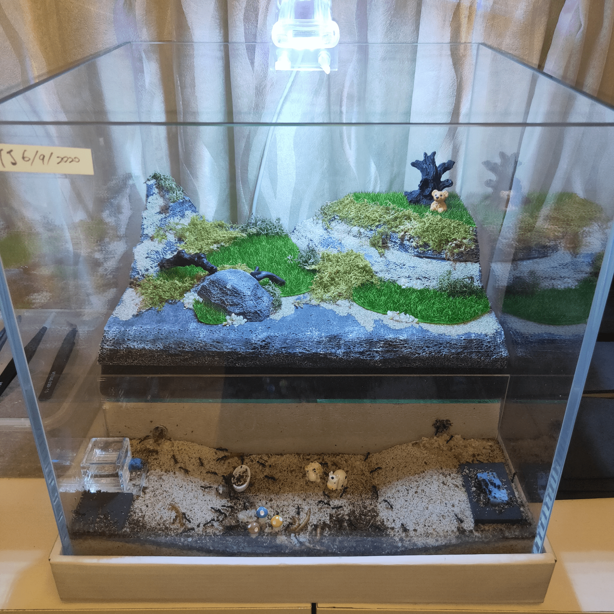 Legally Owned Pets In SG - Ant farm