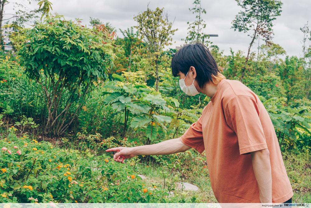 bukit gambok butterfly garden