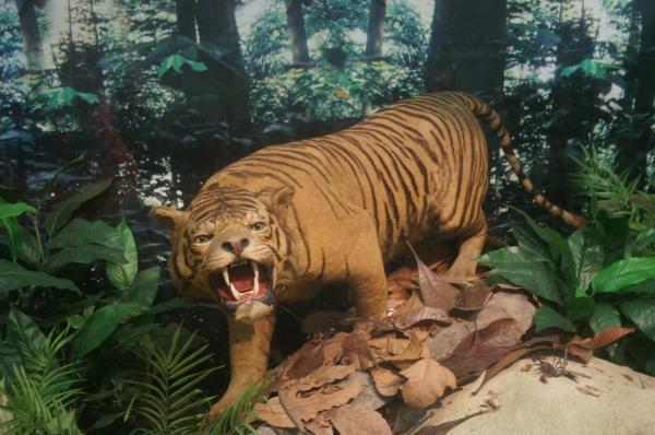 bukit timah nature reserve tiger exhibit