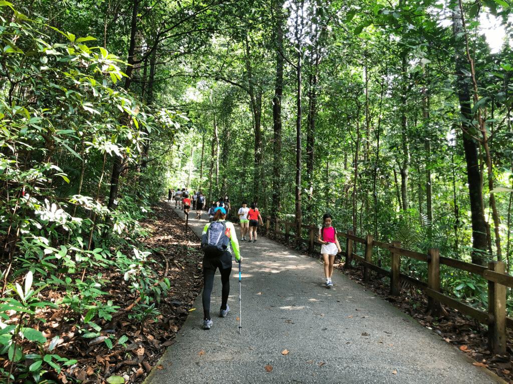 bukit timah nature reserve hiking trail