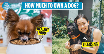 cost of owning a dog in singapore