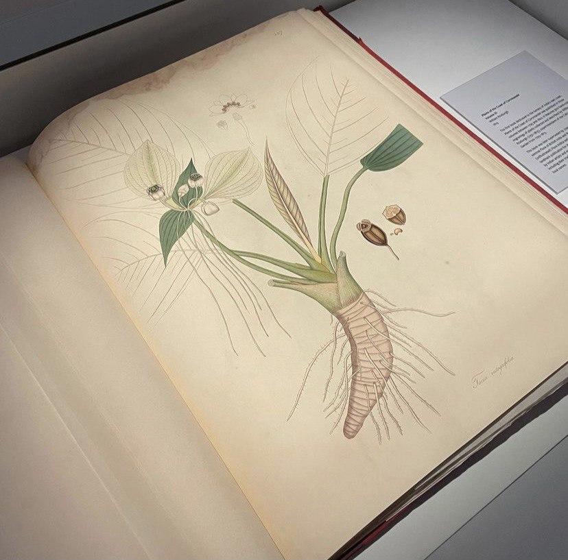 Botanical Art Gallery