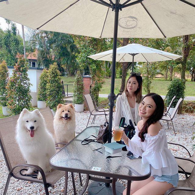 Chow Cute Cafe