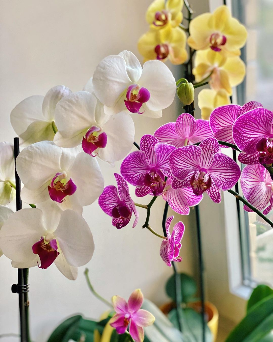 luxury activities singapore - orchid tour and perfume workshop (1)