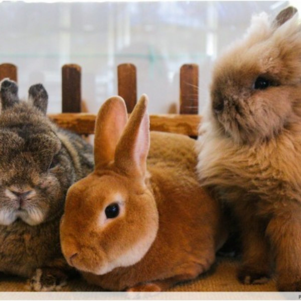 A Rabbit Headquarters Actually Exists In Singapore And It S A Must Visit For All Pet Lovers