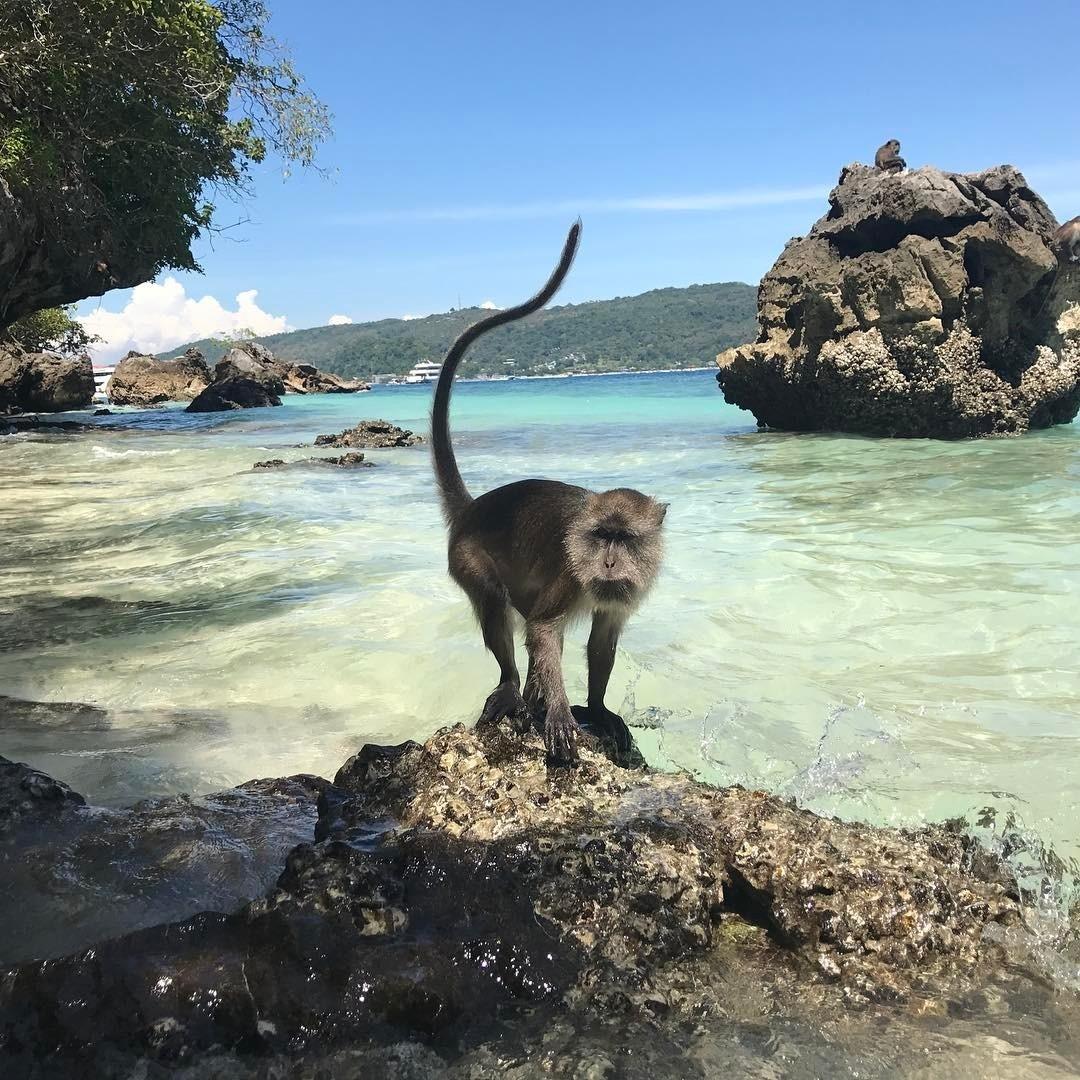 Day trips from Phuket - Monkey Island